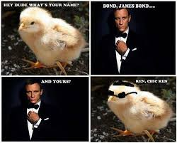 Funny Chicken Memes - funny pictures funny online pictures