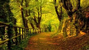 ub 86 forest wallpaper forest hd photos 43 free large images