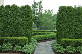 Evergreen Landscaping Ideas 5 Landscape Ideas To Create Privacy In Your Yard Peter Doran Lawn