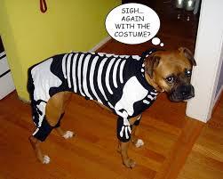 Halloween Costumes Boxer Dogs Kellismith