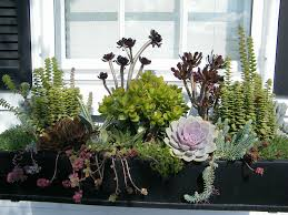 What To Plant In Window Flower Boxes - 204 best trailing cascading spiller plants for baskets or