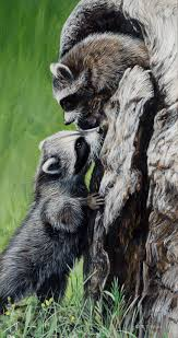 215 best raccoons images on pinterest animals wild animals and