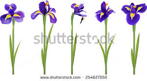 iris flowers iris flowers vector free vector stock graphics