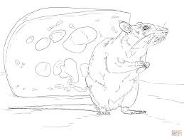 realistic rat coloring page free printable coloring pages