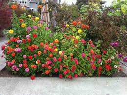 this charming colourfull flower garden design ideas pic above