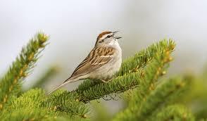 Ontario Backyard Birds How To Identify A Bird In 10 Easy Steps Wild Bird Blog