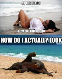 funny beach body memes memeologist com