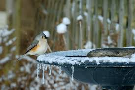 easy tips to use a heated bird bath