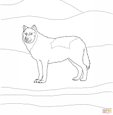arctic white wolf coloring page free printable coloring pages