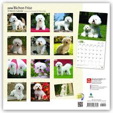 1 month old bichon frise amazon com bichon frise 2018 12 x 12 inch monthly square wall