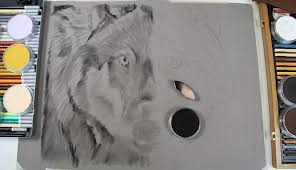 thedrawingforum com view topic detailed wolf drawing step by