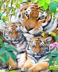 2017 crystals paint kit 100 diy tiger family 5d diamond painting