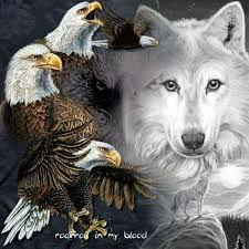 103 best wolves eagles images on nature animals
