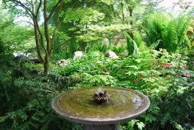 Shady Backyard Landscaping Ideas Landscaping Small Compound Landscaping Ideas