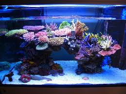 best lighting for corals is it possible to have a reef tank look like this what do i need
