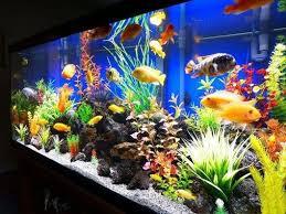 aquarium decorations 50 best diy aquarium decorations ideas meowlogy