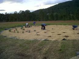 planting the lavender labyrinth u2013 michael u0027s messenger
