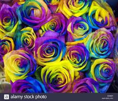 purple roses for sale rainbow roses on sale at new covent garden market london uk