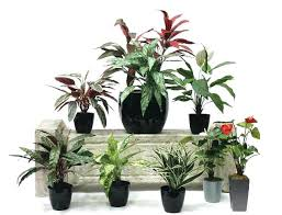 homes dacor marvelous decoration plant wall decor extremely