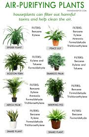 best plants for air quality best house plants for clean air and better health theindianspot
