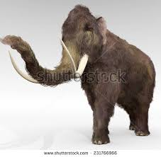 woolly mammoth stock images royalty free images u0026 vectors