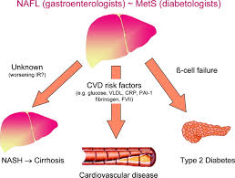 fatty liver arteriosclerosis thrombosis and vascular biology