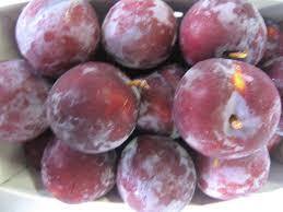 michigan plum growers plum variety descriptions