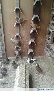cuisine des pigeons voyageurs paniers et pigeons voyageurs a vendre 2ememain be