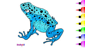 blue poison dart frog drawing and coloring page for kid insect