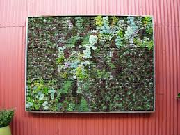 living wall succulents home design ideas and pictures