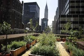 trends foodscaping is the latest trend in landscape design