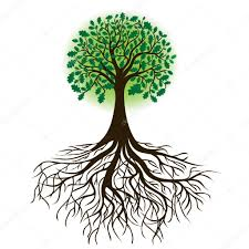 oak tree with roots and dense foliage vector stock vector