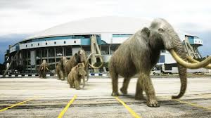 woolly mammoth extinction project means