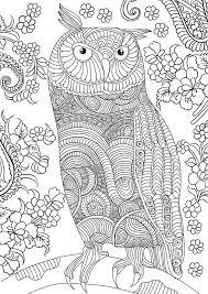coloring owl coloring page zentangle doodle u0026 designs