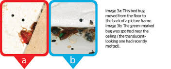 One Bed Bug Bed Bug Research Mapping Bed Bug Mobility Pct Pest Control