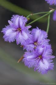 Awesome Looking Flowers Best 25 Lilies Ideas On Pinterest Lily Lilies Flowers And