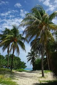 best 25 sol palmeras varadero cuba ideas on pinterest