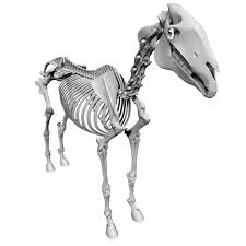 horse skeleton halloween 3d max whale skeleton animal