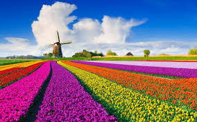 fly to europe to enjoy spring u0027s tulips right now for only 354