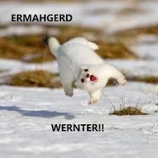 Ermahgerd Animal Memes - ermahgerd imgur