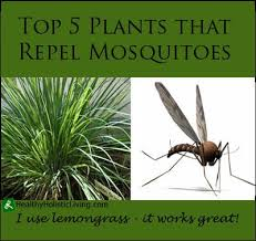 How To Get Rid Of Mosquitoes In My Backyard Https I Pinimg Com 736x 12 9e Fc 129efc2a119c76d