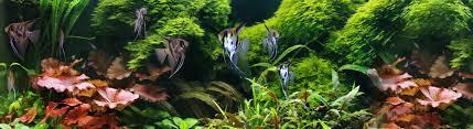 contact tropical fish aquatic plants exporters in sri lanka