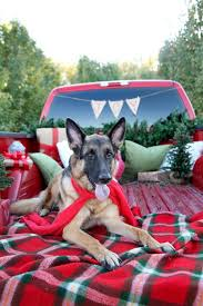 German Shepherd Christmas Yard Decorations by Best 25 Dog Christmas Pictures Ideas On Pinterest Christmas Dog