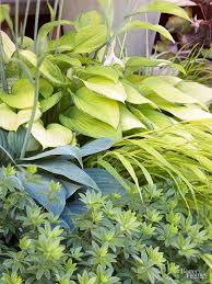 Our Favorite Plants How To by 1232 Best Landscape Images On Pinterest Gardening Plants And Garden