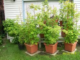 Garden Containers Large - backyard plants potted with with large plastic garden pots painted