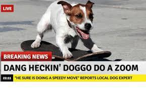 Breaking News Meme - live breaking news dang heckin doggo do a zoom 2211 he sure is