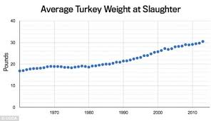 how artificial insemination has led to thanksgiving turkeys nearly