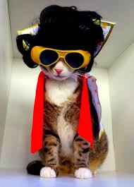 Halloween Costumes Cats Cats Wear Halloween Costumes Baxterboo