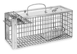 Cheap Rat Cage Amazon Com Toolbank The Big Cheese Rat Trap Cage Poison Free