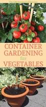 Vegetables For Container Gardening by 49 Best Apartment Supermarket Garden Images On Pinterest Veggie
